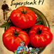 Tomate F1 - Supersteak