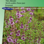 Mentha pouliot, Chasse-puce