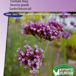 Verveine grande Purple Top
