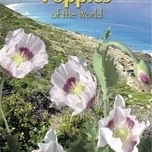 Poppies of the world - Pavot des Jardins