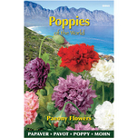 Poppies of the world - Pavot Somnif. 'Paeoniflorum' Dbl Var.