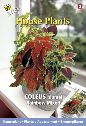 Acheter plante d 39 appartement coleus rainbow mix en ligne for Plante d appartement