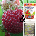 Fraises Framberry Paquet Complet