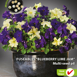 Fuseable multi-seed pil Petunia Blueberry Lime Jam F1