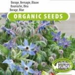 Bourrache Bleu EKO - Borago officinalis