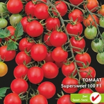 Tomate Supersweet 100 F1 - Lycopersicon